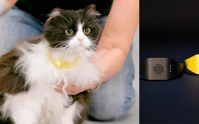 Catterbox: Ein vernetztes Halsband übersetzt das Miauen ihrer Katze